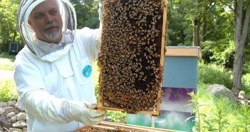 O curso desenvolverase na Casa da Xuventude, no apiario didáctico da Cortiña e en colmeares da zona
