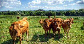A charla estará centrada no aproveitamento sostible da terra para a gandeiría (Foto de portada. Flickr *k59)