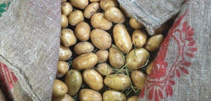 En moitas casas xa teñen a semente mercada para este ano e tamén en moitos lugares as patacas de cedo xa están postas