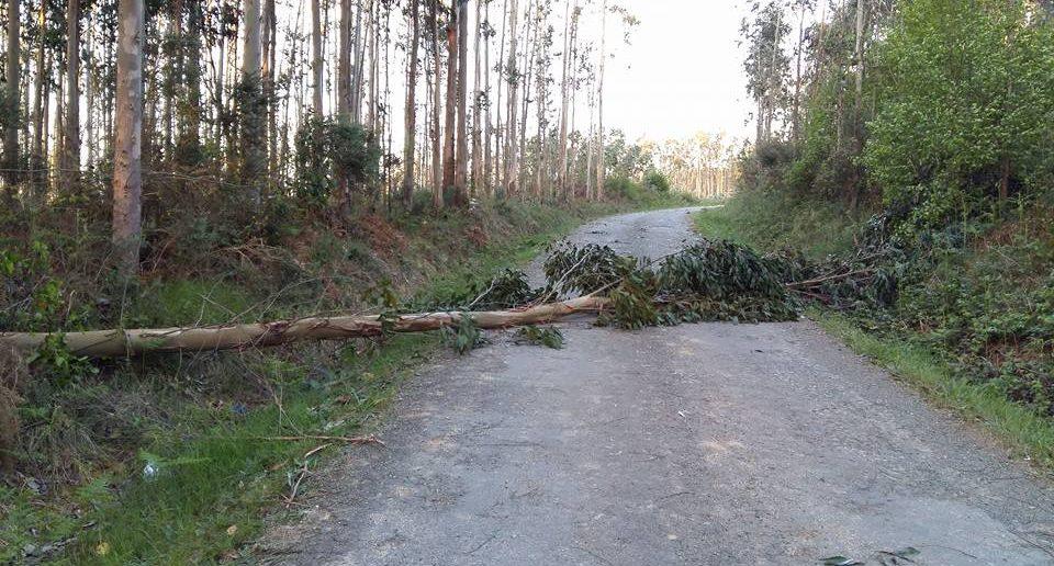 O vento tirou numerosas árbores nas pistas