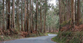 Moitas plantacións forestais non gardan as distancias mínimas con respecto ás vías públicas.