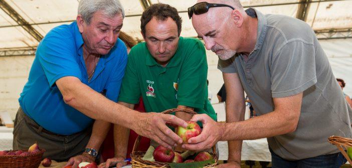 Ramiro Martínez -no centro da imaxe- é unha das máximas autoridades de Galicia na reprodución e cultivo de árbores froiteiras