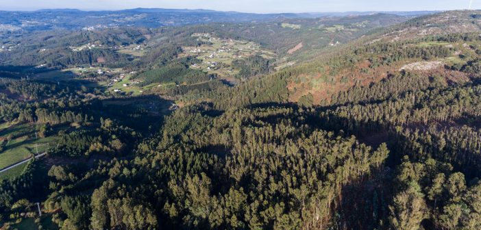 Dous terzos do territorio galego son monte e o crese que o eucalipto ocupa arredor de 450.000 hectáreas