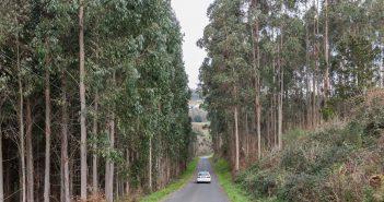 Existen plantacións forestais que incumpren a normativa en canto a distancias a vivendas e infraestruturas públicas