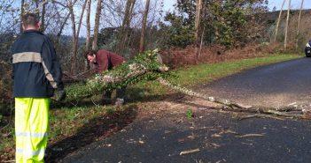 Momento en que se retiraba unha árbore na estrada que vai da Camba a Moeche. (Foto: Amparo Calvo)