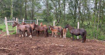 Os animais encóntranse en depósito nunhas instalacións privadas situadas en Cabreiros, no concello lugués de Xermade
